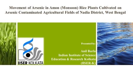 Movement of Arsenic in Amon (Monsoon) Rice Plants Cultivated on Arsenic Contaminated Agricultural Fields of Nadia District, West Bengal Presented by: Anil.