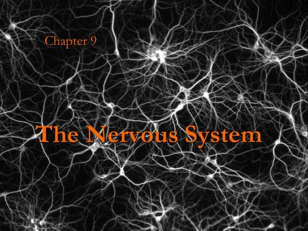 The Nervous System Chapter 9. Maintaining Homeostasis… Your body has physiological and biochemical mechanisms in place to help it maintain a stable internal.