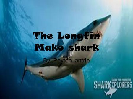 The Longfin Mako shark By: Peyton lantrip. Adaptations Physical Traits: The Longfin Mako shark doesn't need camouflage beacause of it's incrediable speed.