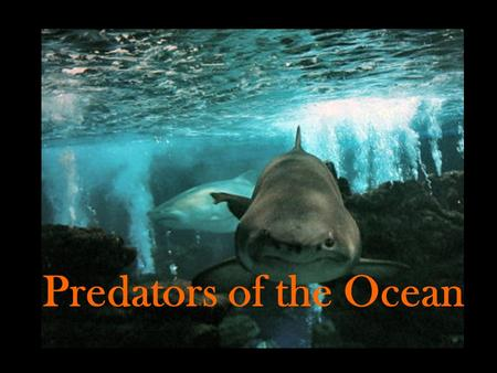 Predators of the Ocean. They live in waters all over the world, in every ocean, and even in some rivers and lakes. Unlike bony fish, sharks have no bones;