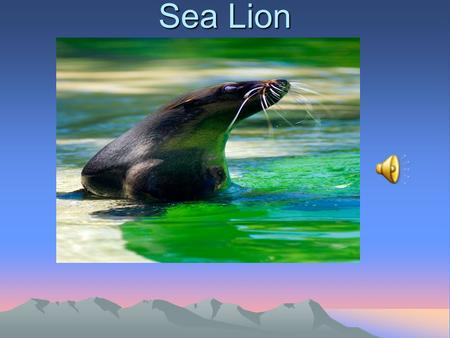 Sea Lion Mammal It is a mammal because it gives birth to an alive baby and it has fur.