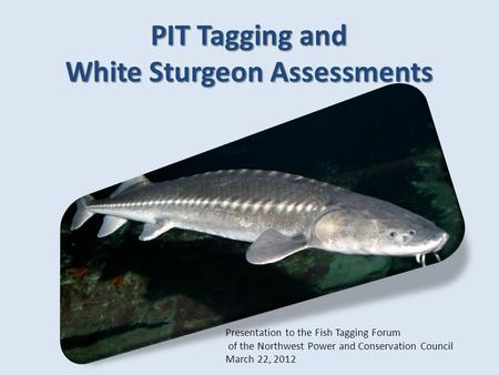 Presentation to the Fish Tagging Forum of the Northwest Power and Conservation Council March 22, 2012 PIT Tagging and White Sturgeon Assessments.