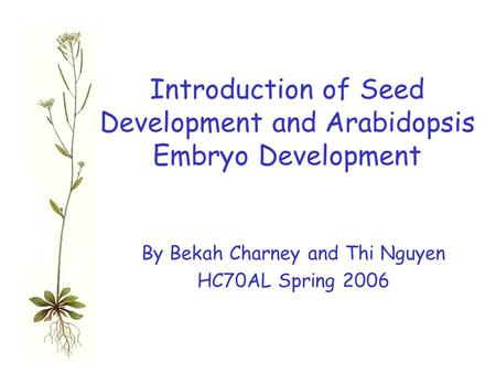 Introduction of Seed Development and Arabidopsis Embryo Development By Bekah Charney and Thi Nguyen HC70AL Spring 2006.