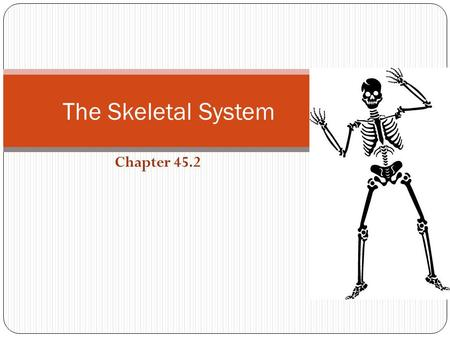Chapter 45.2 The Skeletal System. The Human Skeleton Has approximately 206 bones! Functions: Gives Shape and Support Protection Moves Muscles Forms Blood.