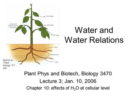 "Water and Water Relations Plant Phys and Biotech, Biology 3470 Lecture 3; Jan. 10, 2006 Chapter 10: effects of H 2 O at cellular level Rost et al., ""Plant."