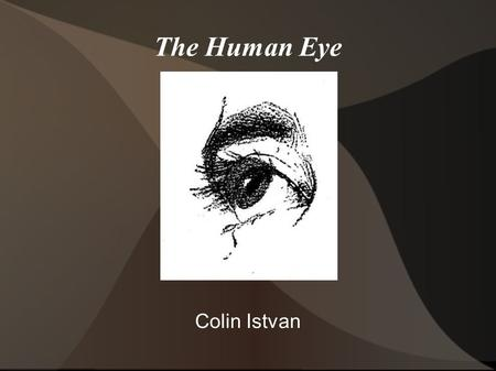 The Human Eye Colin Istvan. Eye It is estimated that the eye took more than 30 million years to evolve. The human eye is not the largest, most sensitive,
