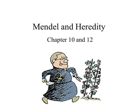 Mendel and Heredity Chapter 10 and 12.