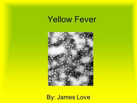 Yellow Fever By: James Love. Where it began The first recorded case of the epidemic is from Yucatan in 1648.