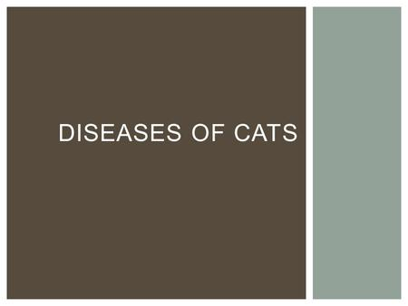DISEASES OF CATS.  Feline Panleukopenia  Cat distemper caused by a parvovirus or DNA virus  Affects cats less than 16 weeks  75% death rate  Symptoms: