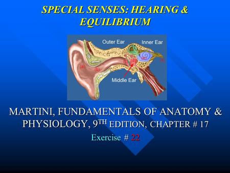 SPECIAL SENSES: HEARING & EQUILIBRIUM MARTINI, FUNDAMENTALS OF ANATOMY & PHYSIOLOGY, 9 TH EDITION, CHAPTER # 17 Exercise # 22.