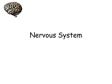 Nervous System. Nervous System Functions 1. Sensory – incoming signals 2. Motor - movement 3. Integrative – in brain and spinal cord only (processors/relay.