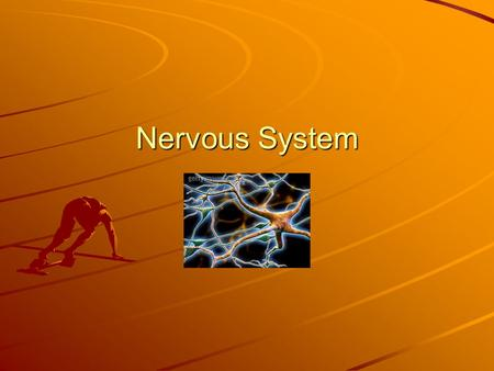 Nervous System. Lesson 7 Vocab neurons – nerve cells, which make up your nervous system cerebrum – the largest part of the brain; where most of your.