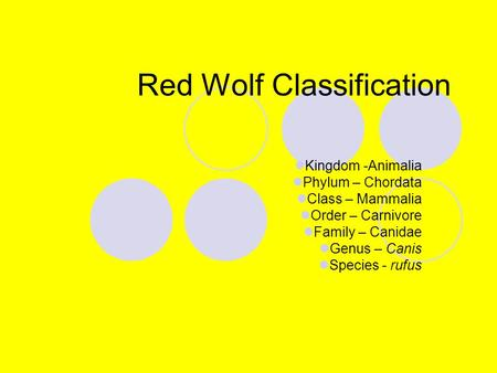 Red Wolf Classification Kingdom -Animalia Phylum – Chordata Class – Mammalia Order – Carnivore Family – Canidae Genus – Canis Species - rufus.