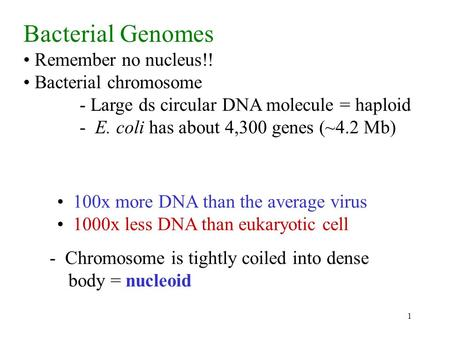 1 Bacterial Genomes Remember no nucleus!! Bacterial chromosome - Large ds circular DNA molecule = haploid - E. coli has about 4,300 genes (~4.2 Mb) 100x.