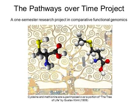 The Pathways over Time Project A one-semester research project in comparative functional genomics Cysteine and methionine are superimposed over a portion.