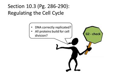 Section 10.3 (Pg. 286-290): Regulating the Cell Cycle.