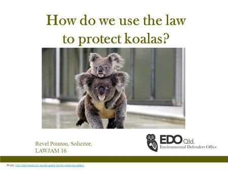 How do we use the law to protect koalas? Revel Pointon, Solicitor, LAWJAM 16 Photo:  /http://petthreads.com.au/pet-care/8-tips-for-koala-dog-safety.