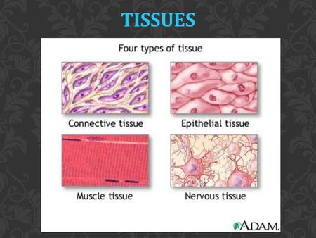 TISSUES. Groups of cells that are similar in structure and perform a common or related function Basic tissue types:  Epithelial  Connective  Muscle.