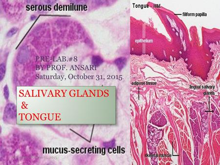 1 SALIVARY GLANDS & TONGUE PRE-LAB.#8 BY PROF. ANSARI Saturday, October 31, 2015. Saturday, October 31, 2015.