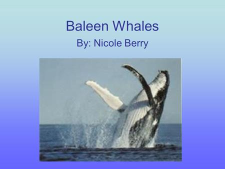 Baleen Whales By: Nicole Berry.