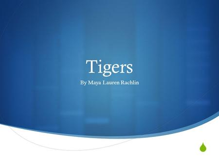  Tigers By Maya Lauren Rachlin. Body Parts Big Eyes-Tigers big eyes help them hunt when there prey is awake. Long tails-Tigers long tails help them lead.