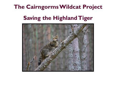 The Cairngorms Wildcat Project Saving the Highland Tiger