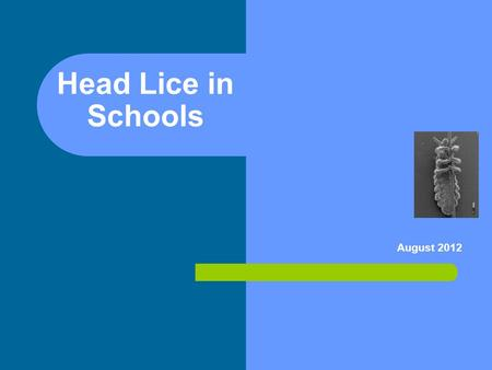 Head Lice in Schools August 2012. Objectives: After this presentation, school staff will: Identify at least 3 facts about head lice Describe management.