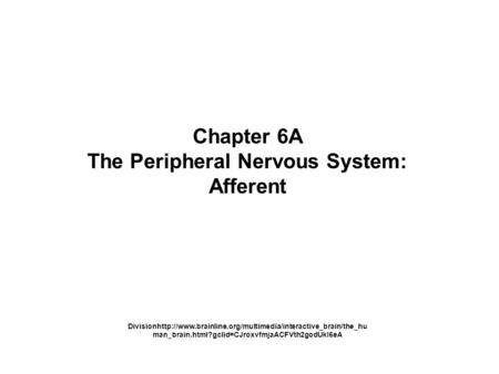 Chapter 6A The Peripheral Nervous System: Afferent Divisionhttp://www.brainline.org/multimedia/interactive_brain/the_hu man_brain.html?gclid=CJroxvfmjaACFVth2godUkI6eA.