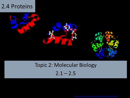 Topic 2: Molecular Biology 2.1 – 2.5 2.4 Proteins