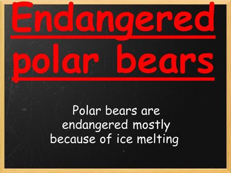 Endangered polar bears Polar bears are endangered mostly because of ice melting.