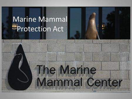 "Marine Mammal Protection Act. Purpose of law Protects all marine mammals Regulates ""take"" animals in US waters Regulates imports of protected mammals."