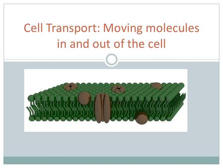 Cell Transport: Moving molecules in and out of the cell.