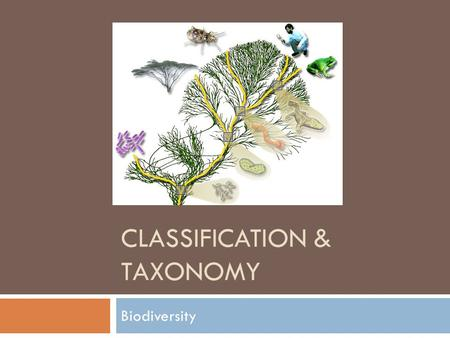 CLASSIFICATION & TAXONOMY Biodiversity. Classification  The grouping of objects or information based on similarities  Why do we need to classify things?
