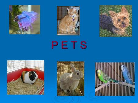 P E T S. THE BASIC NEEDS OF PETS food water food water shelter love shelter love.