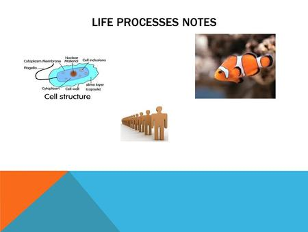 LIFE PROCESSES NOTES. DEFINE THE FOLLOWING TERMS: Biology- the study of life Organism- any living thing Metabolism- all the chemical reactions Homeostasis-
