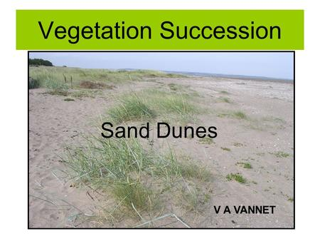 Vegetation Succession Sand Dunes V A VANNET. Plant Succession Evolution of plant communities From pioneer species to climax vegetation Related to change.