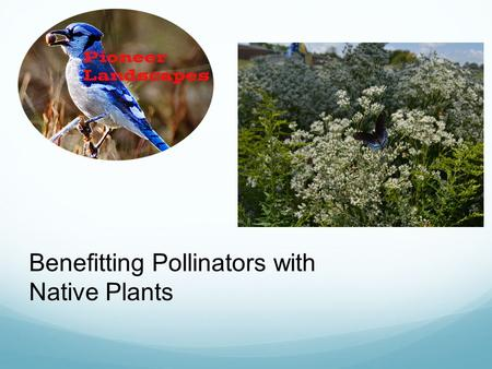 Benefitting Pollinators with Native Plants. Long Tongued.