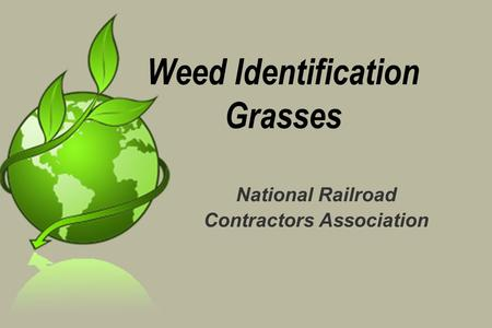 Weed Identification Grasses National Railroad Contractors Association.