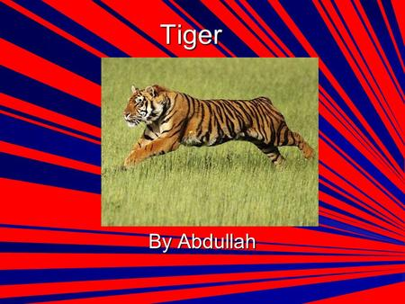 Tiger By Abdullah. Description Tigers are mammals. Their fur is mostly orange with black strips. Tigers are a part of the cat family. They're the strongest.