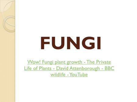 FUNGI Wow! Fungi plant growth - The Private Life of Plants - David Attenborough - BBC wildlife - YouTube.