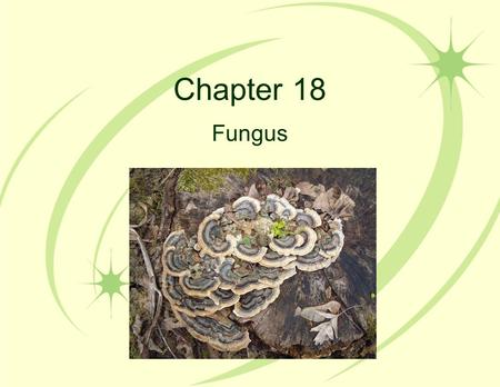 Chapter 18 Fungus. 18.1 Fungi are adapted for nutrition by absorption hyphae: tiny threads of cytoplasm surrounded by a plasma membrane and covered by.