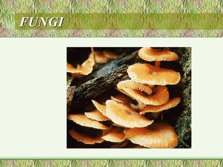 FUNGI. why are mushrooms not plants? Features of fungi eukaryotic, mostly multicellular; terrestrial; have thin filaments called hyphae;