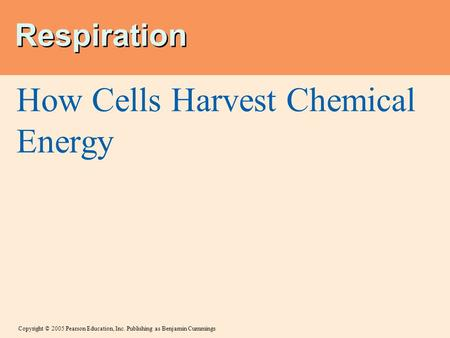 Copyright © 2005 Pearson Education, Inc. Publishing as Benjamin Cummings Respiration How Cells Harvest Chemical Energy.