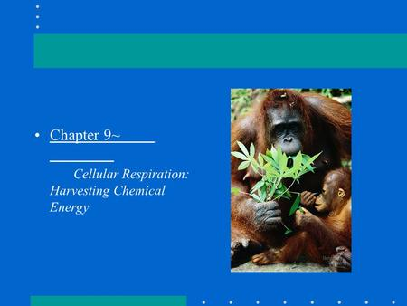 Chapter 9~ Cellular Respiration: Harvesting Chemical Energy.
