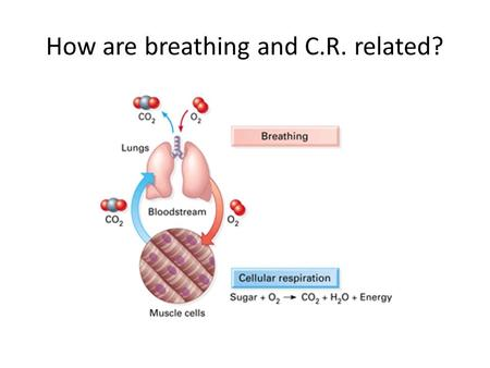 "How are breathing and C.R. related?. How is energy created in a controlled manner? Oxygen acts as the final ""e - acceptor"" WHY? – Oxygen has a – charge."