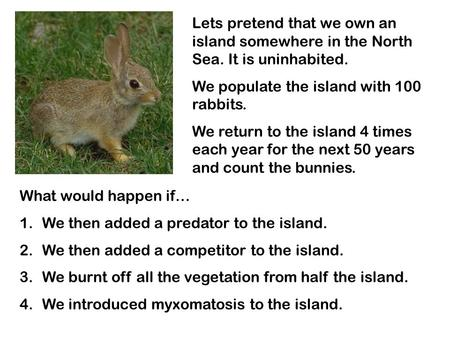 Lets pretend that we own an island somewhere in the North Sea. It is uninhabited. We populate the island with 100 rabbits. We return to the island 4 times.
