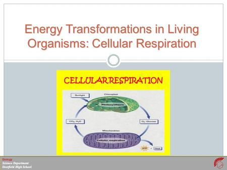 Biology Science Department Deerfield High School Energy Transformations in Living Organisms: Cellular Respiration.