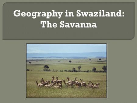 Geography in Swaziland: The Savanna.  Swaziland is covered almost entirely by grasslands, savannah, and mixed shrubs.