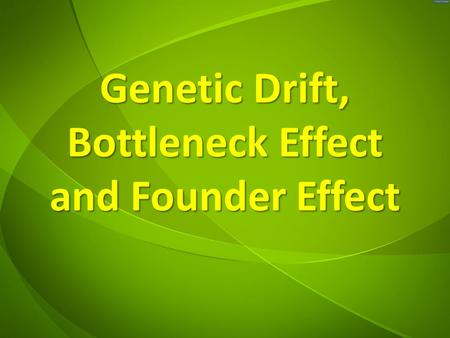 Genetic Drift, Bottleneck Effect and Founder Effect.