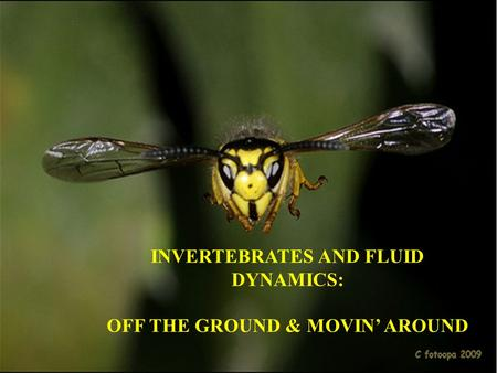 INVERTEBRATES AND FLUID DYNAMICS: OFF THE GROUND & MOVIN' AROUND.